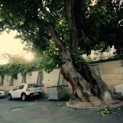 تهران از کوچه هایش شروع میشود – گذر در شهر